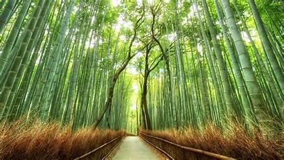 Desktop Japanese Japan Background Forest Bamboo