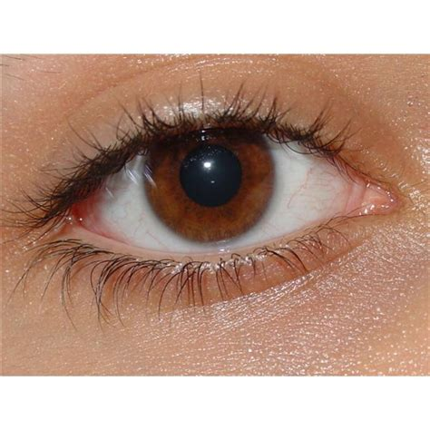 brown eye colors hazel and genetics how chromosomes are responsible