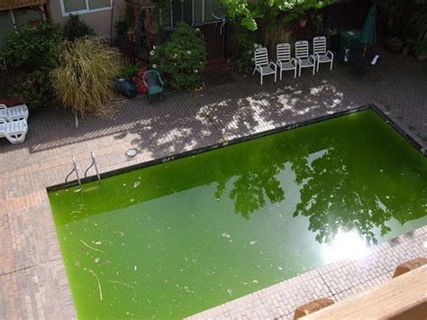 Green Swimming Pool Picture « Inground Pools