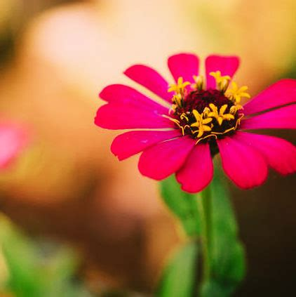 flowers dp images  whatsapp status  hindi english
