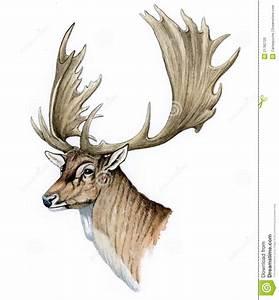 Fallow Deer Female Head (Dama Dama) Royalty-Free Cartoon