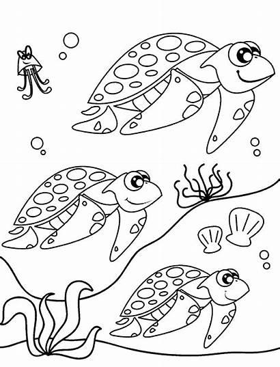 Coloring Penyu Turtle Sea Migration Gambar Turtles