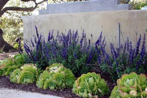 southern california landscaping ideas william joyce design southern california vineyard