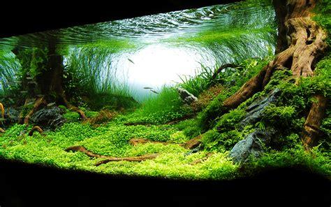 Aquascape Wallpaper by Aquarium Backgrounds Free Pixelstalk Net