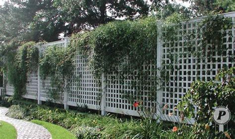 lattice fence with vines here s a 8 foot high fence but this one has squares instead of diagonal lattice i like this