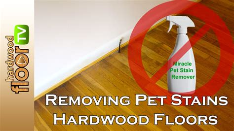 Remove Pet Urine Stains From Hardwood Floors Youtube