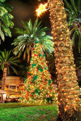 tropical lighted christmas tree palm tree hawaiian hawaii and tree