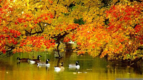 Fall Backgrounds New York by Autumn In New York Wallpapers Seasonal Frankenstein