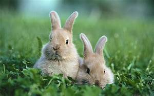 Cute Rabbits In Photos | Funny And Cute Animals