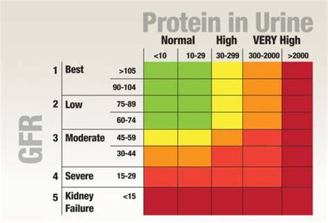 urine albumin normal range 17 best images about protein in urine on devices signs and the colour