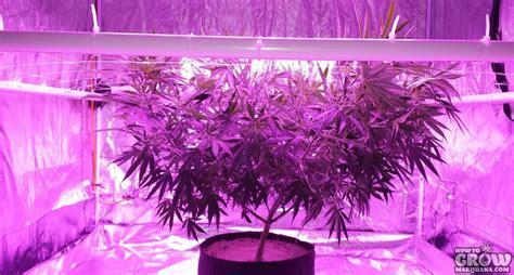 Hid Le Grow by Led Grow Lights