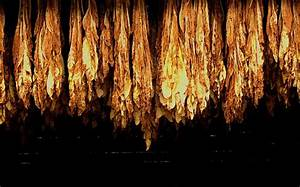 1000+ images about Tobacco Farm on Pinterest | Farmers ...