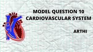 Model Question 10 Cardiovascular System  U00bb Mrb Nurses Memes