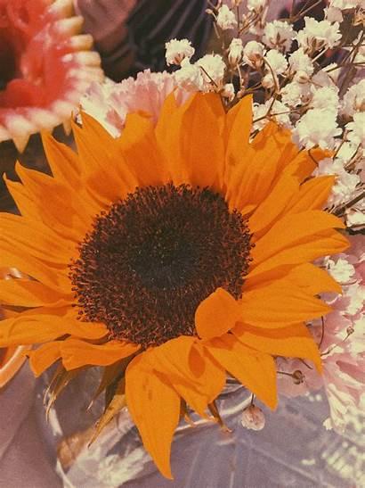 Aesthetic Orange Sunflower Wallpapers Backgrounds Aesthetics Desktop