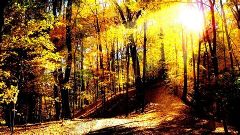 Autumn Wallpapers For Mac by Mac Backgrounds Leaves Landscape High Definition Autumn