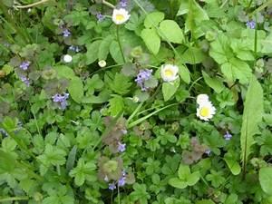 Kräuter Zum Essen : pflanzenschutz mit em em effektive mikroorganismen ~ Lizthompson.info Haus und Dekorationen