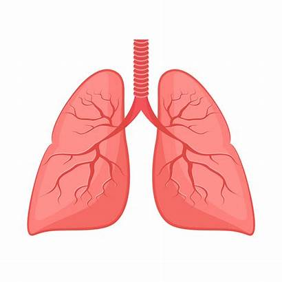 Lung Lungs Clip Winter Vector Health Bronchial