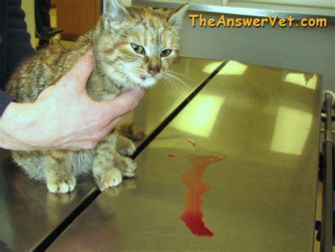 info  urinalysis  urine tests  dogs  cats