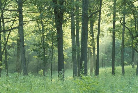 woodland great missouri birding trail