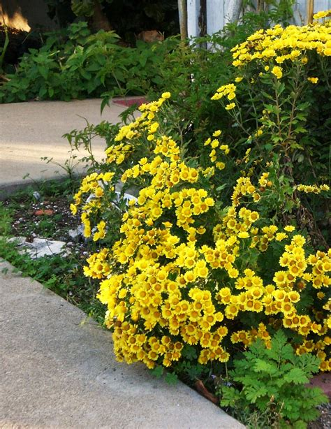 Eye Candy for the Famished: Fall Flowers - Yellow Mums
