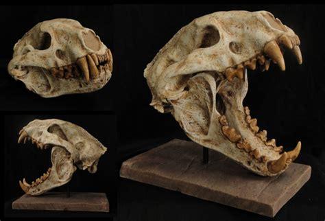 Wolverine-like Mammal Skull - Gaston Design, Inc.