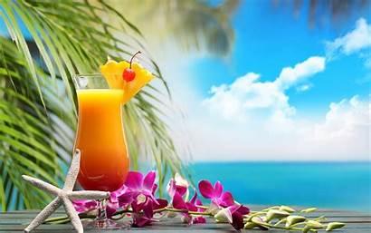 Cocktail Drinks Drink Cocktails Orchid Hintergrundbilder Resorts