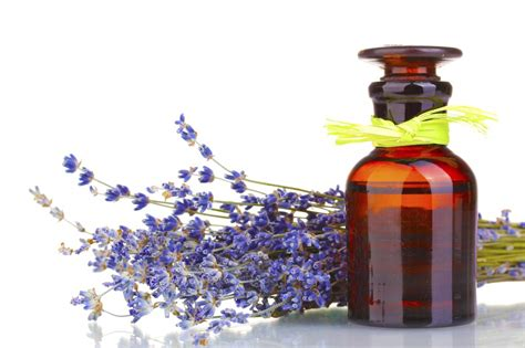 Le Berger Oils Toxic by Resolve To Replace Toxic Treatments With Essential Oils