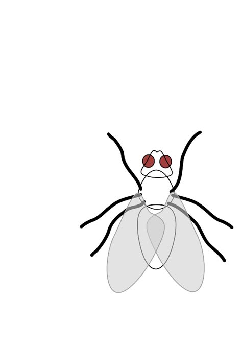 Back them up with references or personal experience. Fly Clip Art Free - Cliparts.co