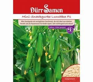 Mini Gurken Pflanzen : d rr samen mini snackgurke 39 lunchbox f1 39 dehner garten center ~ Buech-reservation.com Haus und Dekorationen