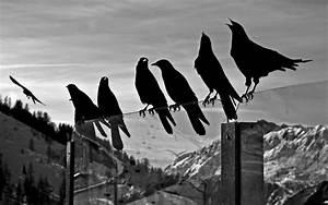 Black and White Bird Wallpaper