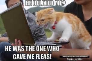 Flea Bath Kittens Picture