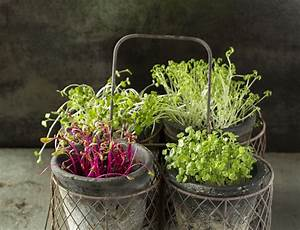Growing Your Own Micro Greens How To Grow Microgreens