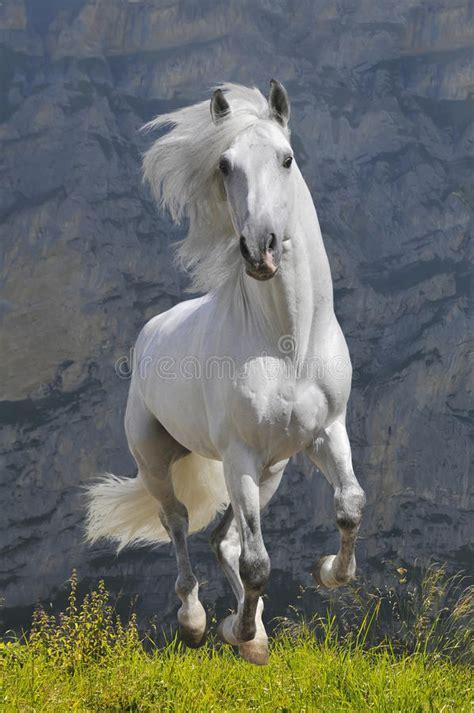 horse gallop runs