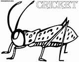 Cricket Coloring sketch template