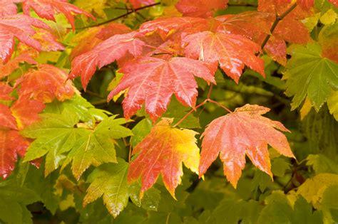 Kādu labumu mums var sniegt dažādi koki, kurus stādīt pie ...