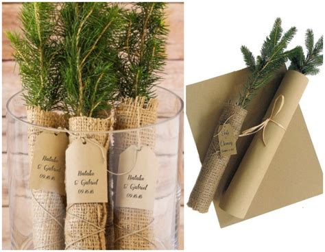 Sweet And Sentimental Tree Seedlings For The Perfect Green