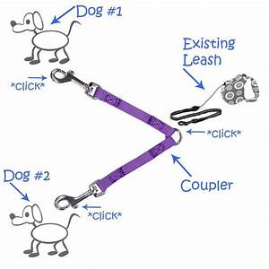 The Simple Solution To Walking Multiple Dogs On Leash