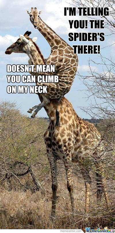 Giraffe Spider Meme - ben s blog even the large giraffes fear spiders