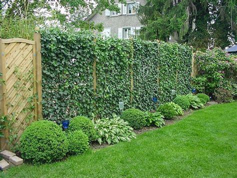 immergrüne bepflanzungen am gartenzaun живая изгородь своими руками рекомендации