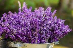 Garten Ideen Mit Lavendel by Wie Gestalte Ich Meinen Garten Im Italienischen Stil