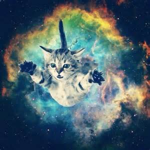 space cats space cats scatsx