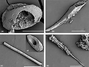 Microfossils From The Radiolarian