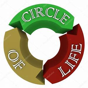 Circle Of Life Arrows In Circular Cycle Showing Connections  U2014 Stock Photo  U00a9 Iqoncept  6637648