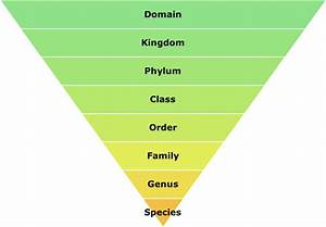 Biodiversity And Biological Classification