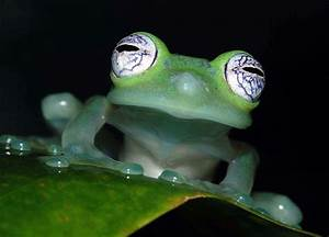 List o' Top Ten Most Exotic Frogs | LOP – Lists o Plenty
