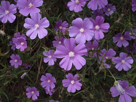 wilg bloem gratis afbeeldingen fabriek bloemblad de lente tuin
