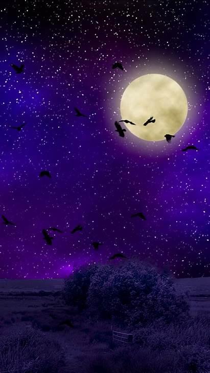 Moon Sky Moonlight Night Birds Starry Photoshop