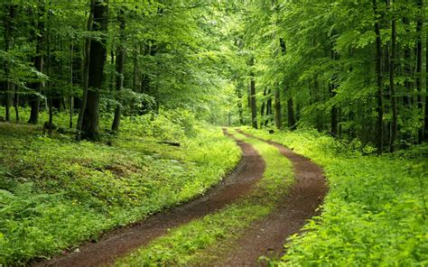 Green Forest Backgrounds  Wallpaper Cave