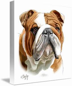 """""""Brown and White Bulldog"""" by Tim Beasley 