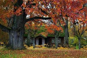 Adore, This, Cabin, In, The, Woods